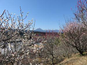 鹿児島大隅半島に お住まいで60才以上の方。  みなさん    (。・o・。)ノ こんにちゎぁ♪   お天気はよくて 昼間はぽかぽかでしたが  五