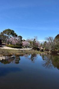 私の秘密 偕楽園  偕楽園(かいらくえん)は、日本の茨城県水戸市にある日本庭園である。  __________