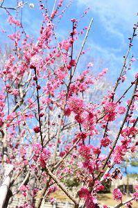 私の秘密 偕楽園  偕楽園(かいらくえん)は、日本の茨城県水戸市にある日本庭園である。  偕楽園には、拡張部を