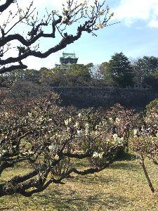 70歳代のバソコン こんばんは。  大阪城に梅を見に行ってましたので 帰ってきてからバタンキューと寝ていました。  去年