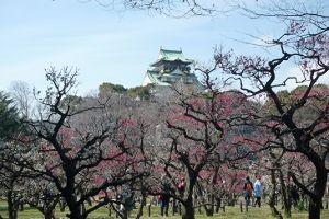 70歳代のバソコン おはようございます。 大阪城の梅も満開を通り越してたり まだだったりでした。  流浪の民。 ♪ブナの