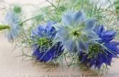 芽が出てふくらんで・・♪ ランタナやペチュニアの優しい画像のアップ^^ 本当にありがとう♪ いつも本当にここを覗くのが楽しみに