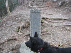 甲斐犬と共に 昨日2016/3/27では  東京都奥多摩の山で  登り出して1/3程の所でカモシカを見つけリードを