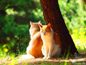 陽だまりに猫♪ 暖かい正月