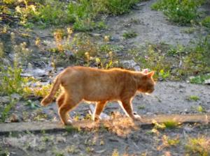 陽だまりに猫♪ *そろり家へ帰ろう