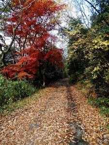 兵庫わびさびの道 弐 おはようございます らくちゃんデス 写真:呑吐ダムへの途中の横道。