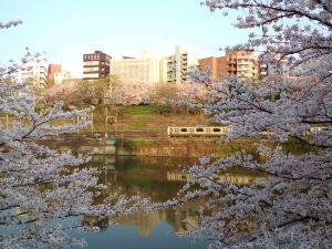 バイクも好き、お酒も好き あっと言う間に桜が満開になりましたね。  これは昨年の写真ですが・・・  神楽坂付近のオープンテラス