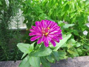 花しおり こちらは台風に振り回されました。 台風12号が猛威を振るってあちことに雨をもたらせようやく治まったら