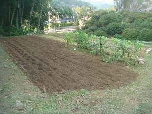家庭菜園 始めました ^^v 【猫の額?】  まさに猫の額ほどの畑ですが。。。昨日。。  台風後。。草刈り、草むしり、耕うん と頑