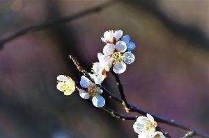 60歳になりました♪ 今日は、寒かったですネ~。 朝、ミゾレが少々降りましたが、雪は降りませんでした。 春が待ち遠しいです