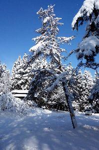 60歳になりました♪ おはようございます。 今朝は青空です。寒くても雪降りよりいいですね。 カーポートの雪もおろしたので安