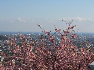 59才になりました♪ 寒暖の差が激しくなってきました。 もうすぐ春ですね(^^♪  先日友人に誘われて桜を見てきました。