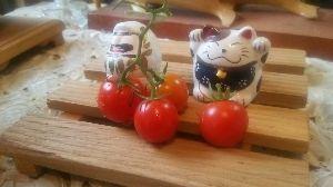 のんびりとしていきませんか? キキちゃん(*^ー^)ノ♪  プランターで育ててて、全然収穫なしで終わっちゃったミニトマト。 今頃に
