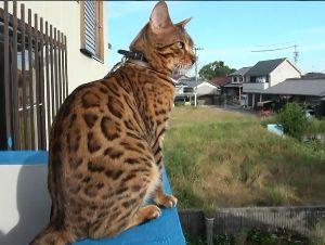 老後の生活、猫達と共に・・・・ はじめまして 定年退職してから猫と暮らすようになりました。 45年ぶりの猫家族です。