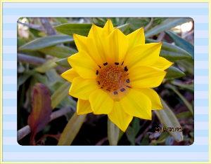暇潰しが仕事に・・・・・・ 厳しい冷え込みも緩んできたね・・・  日中も暖かさが戻り過ごしやすいね・・・  庭の花もオキザリスや