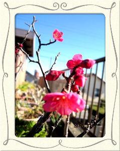 暇潰しが仕事に・・・・・・ 雲一つない青空になり春の陽気に・・・  暖かな陽射しの中でグランドゴルフのクラブマッチ・・・  元気