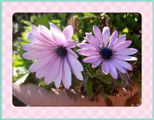 暇潰しが仕事に・・・・・・ 気まぐれ天気に振り回されて大変だね・・・  ポカポカ陽気から一気に冬の寒さに・・・  庭の花も付いて