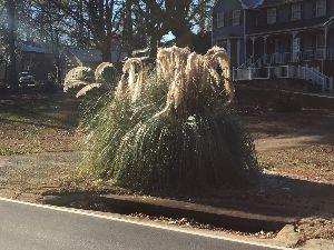 おばばのトビ  40歳未満禁止 実は昨日から当地方を寒波が襲っている。 昨夜は大雪(と言っても知れてるけど)になると騒いでいたが、ま