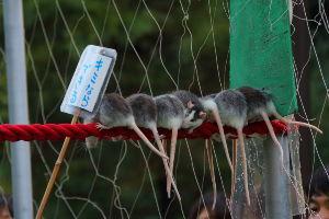 星奈と愉快な仲間たち パートⅡ >とんでもないビッグマウスの口先はめ込み屋を知っている。ま・く・@ト・ッ・-  これ!?