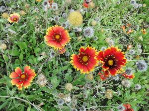 ぼんやりしたい時に・・・ 花を捜してきたけど まだまだですね。  外は殺風景だから、明るい色の花を 選んでみました。