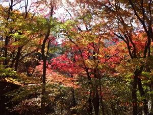 自分探しの旅 こんにちは  こちらは紅葉も終わりかけています 塩原の紅葉をアップしますね!