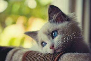 ♦♦♦♦♦可愛い動物・面白い動物画像をただただ貼り付けていくだけのスレ♦♦♦♦♦ ナポピィ~こんばんは(^^*
