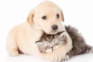 ♦♦♦♦♦可愛い動物・面白い動物画像をただただ貼り付けていくだけのスレ♦♦♦♦♦ いつも玲子ちゃんにしていることです!!  猫ちゃんが玲子ちゃんで、犬ちゃんが自分です!!(微笑)