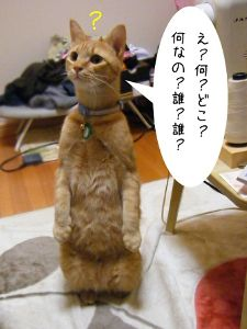 ホストクラブ☆田園☆ 何が言いたいんじゃ~