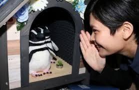 FXは、戦い☆ こんにちわ・・(✿✪‿✪。)ノコンチャ♡  AIペンギン・・めっちゃ!かわいいわぁー (#^.^#)