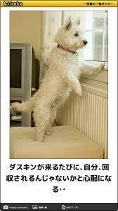 φ(・ω・ ) 回収日(かいしゅうび)  こんばんは その日の犬の気持ち🐾