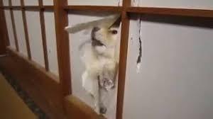 φ(・ω・ ) 戦闘体勢の犬(せんとうたいせいのいぬ)  おはようございます さっきまで番犬だったのに!ฅ^._.^