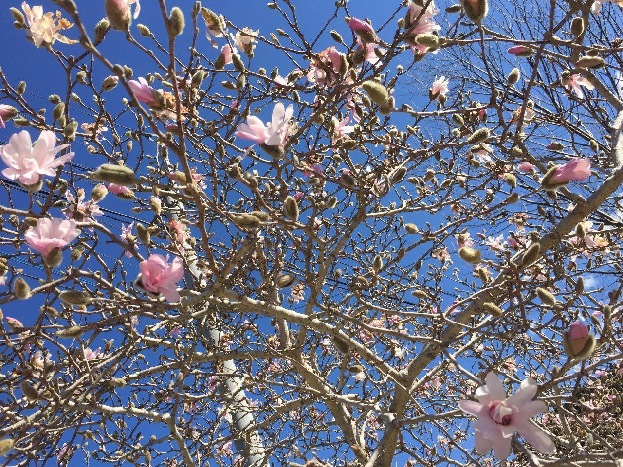 プラント・オパール・・・アクト3 尚ちゃんに感謝ゃー! 今日撮れたてのお花ぁーっ、、!