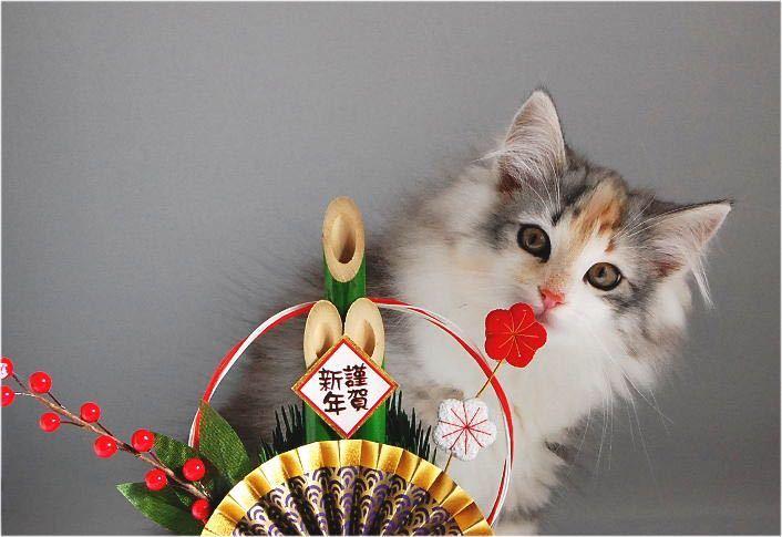 FX 猫板  猫好き集まれ~(*^^*) 番長お久しぶりです(*´▽`*  最近いろんな事が重なって板から離れてました。  今年は