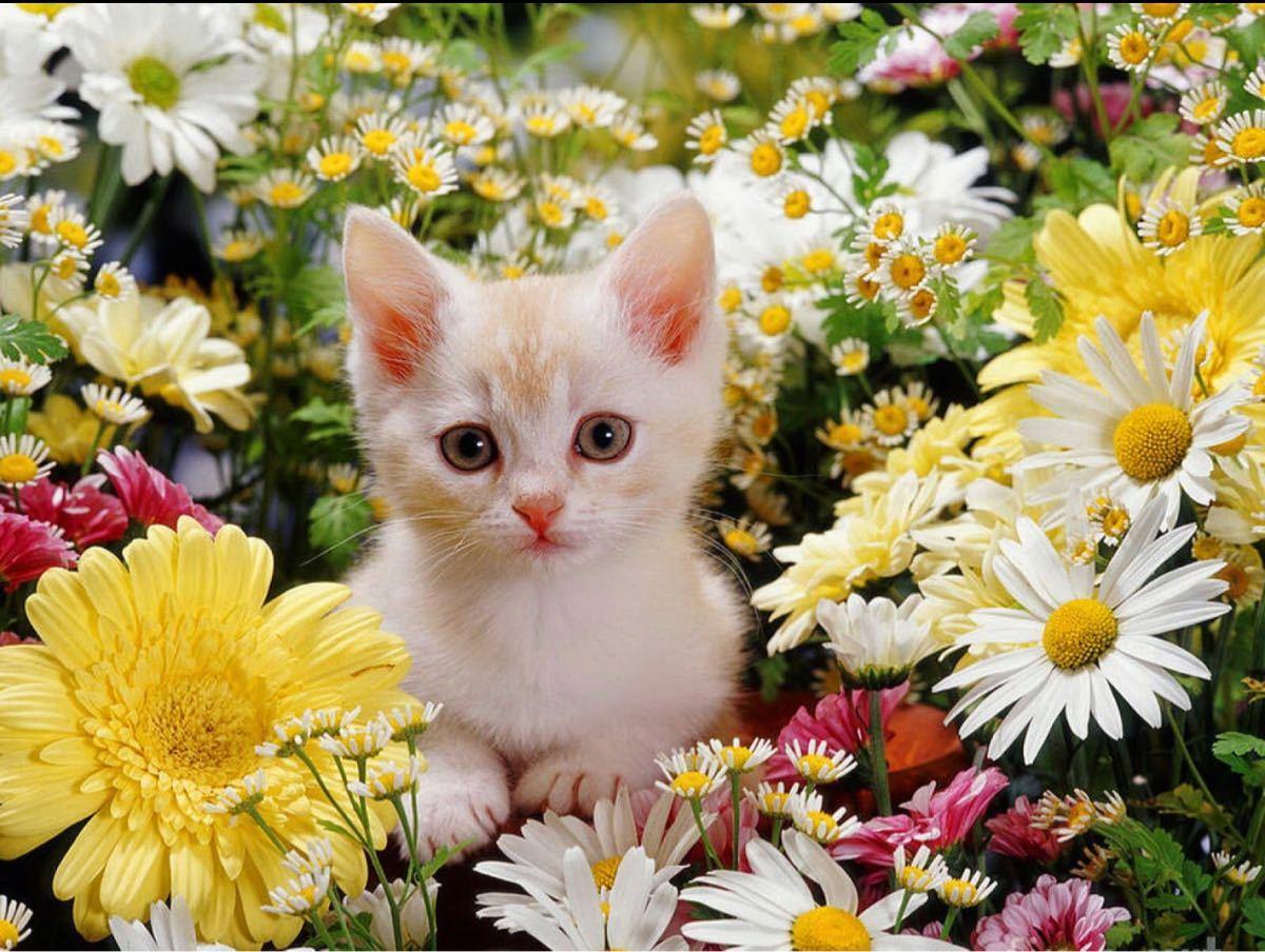 FX 猫板  猫好き集まれ~(*^^*) 今日は猫の日と言う事でこっちにも猫画像を♡♡  初見様もいらしたようなので??
