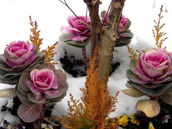 花と共に・・・ シャラクさんのロウバイ、鮮明に撮れていますネ 温かい色合いから春を感じます  subさん、久しぶりの