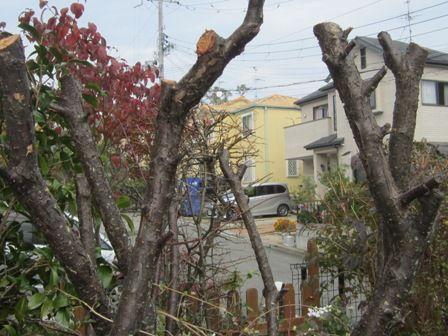 きらきらと。。。。。☆ れもんちゃん! いらしてましたかぁ?(*^^)vおっはよう!! イチゴの木のお花可愛いですね~♪ 家