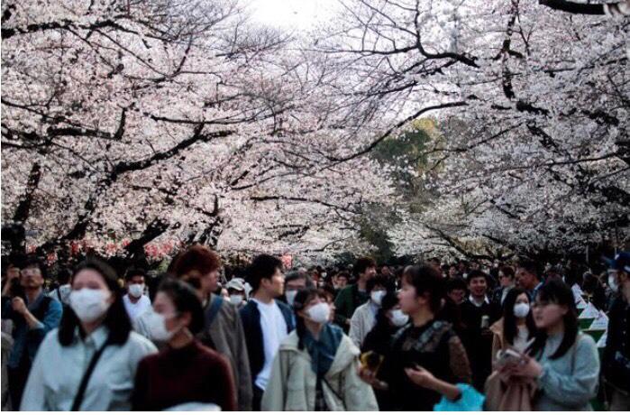 3668 - (株)コロプラ ちなみに1週間前の三連休中の東京の上野の花見の写真見た?コレ  自粛中でコレ!