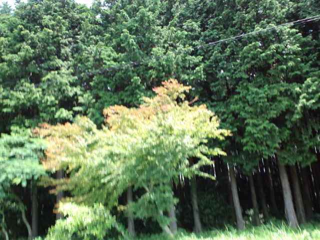 昭和11年生まれの方 お早う御座いますーーテレビみていますが秋田県は被害が出ていますねーーネズミさんくれぐれも無理しないが