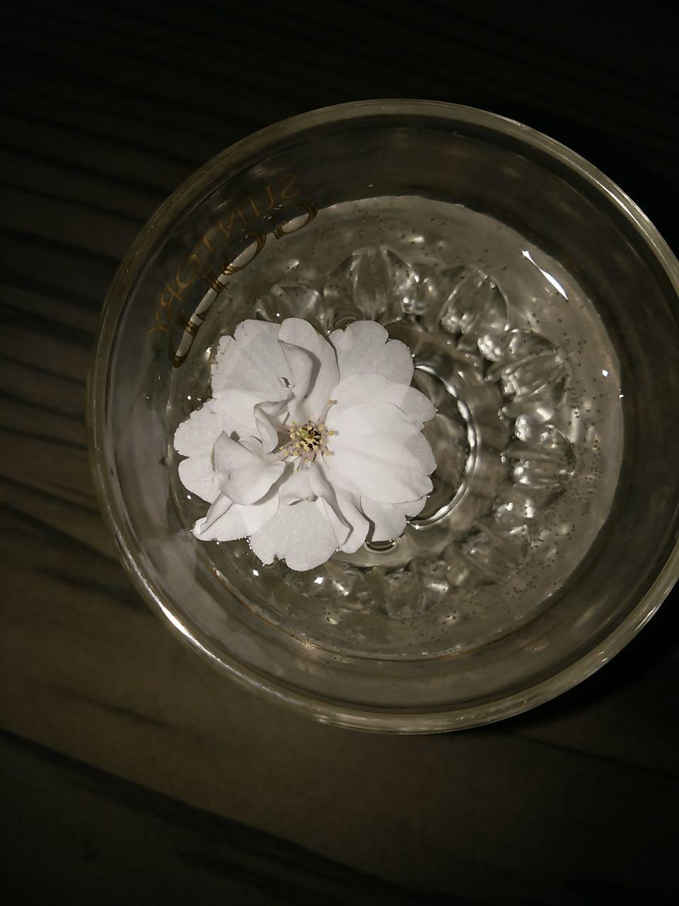 秋色紀行 こんな花見もありかも。コップを覗いて。
