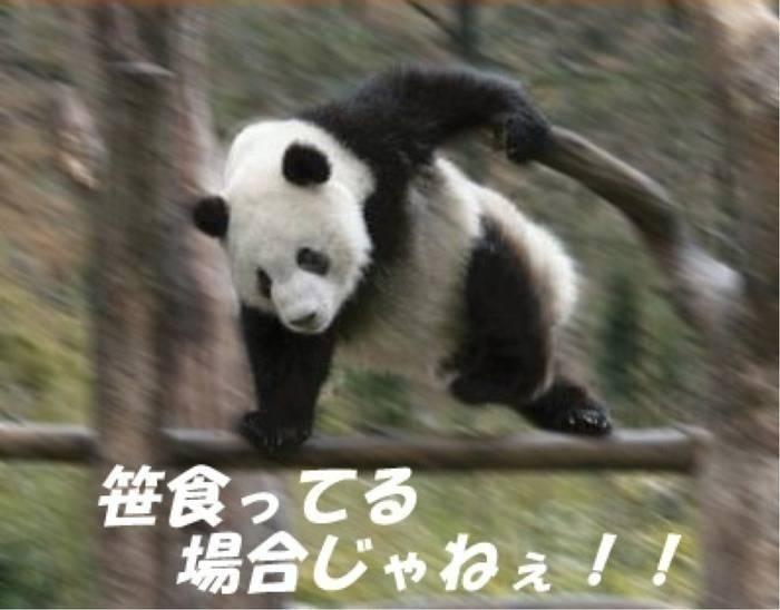 4978 - (株)リプロセル 祭りだ!祭りだ!