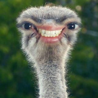 1757 - クレアホールディングス(株) そこw ダチョウはな、綺麗な歯並びなんだ!