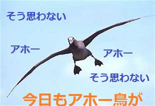 9501 - 東京電力ホールディングス(株) > アホー鳥が逃げ出していく アホー あほー    [強く 乗り換えたい] ここはダメがやっと