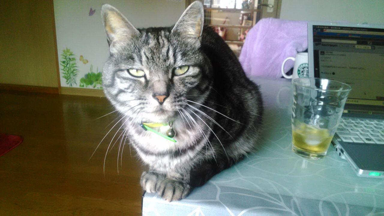 三畳台目⁂夜咄 うちのネコその2 シル ♂