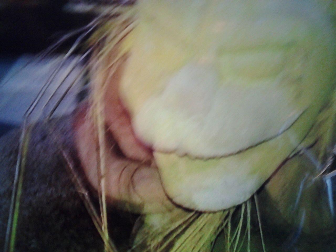 6636 - (株)ソルガム・ジャパン・ホールディングス おんべいしらまんだやそわか 諸魔退散 SOLスーパーソルガム事業成功 SOLジャー福徳円満 のうまく