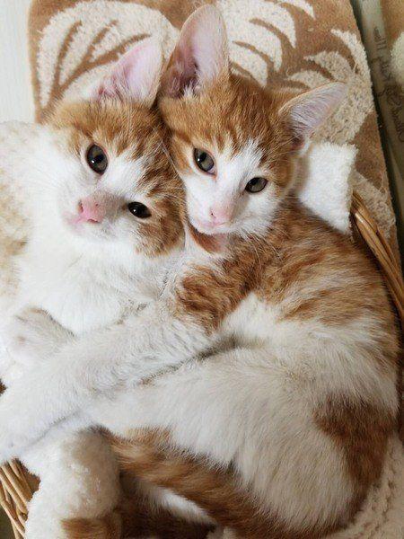 8591 - オリックス(株) こんばんは♪ 今、飼っている猫が居なくなったら ロボット購入を考えているモン(*^_^*)🍀 お休み