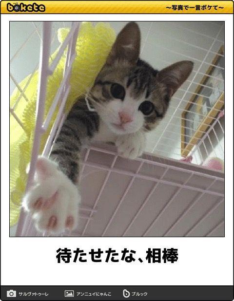 2459 - アウンコンサルティング(株) くるかwww