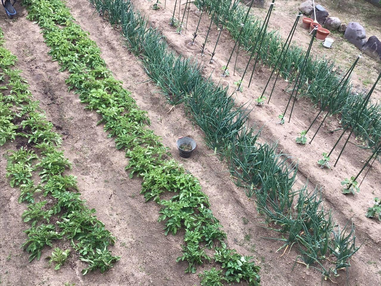 ちくわのつぶやき 家庭菜園! この間、ちくわちゃんがどんなの植えてる?って言ってたでしょ!  そのまま写メしたら隣の会