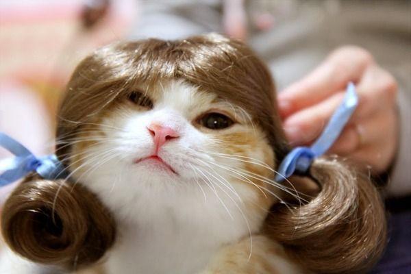 7312 - タカタ(株) ちゃらい猫 うちの猫