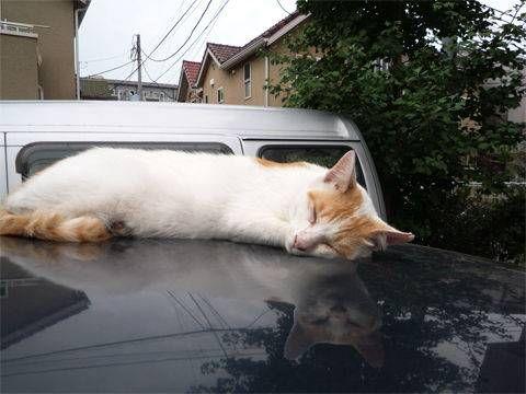 6740 - (株)ジャパンディスプレイ やっと 昼間も画像貼れる様になったw  記念に猫