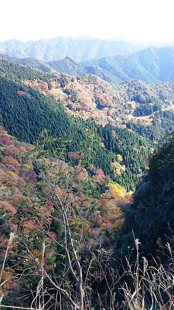☆☆岡山の山、大好き☆☆ 杉山に自然林があるときれいですよね。残念でしたね。、カワウソさん